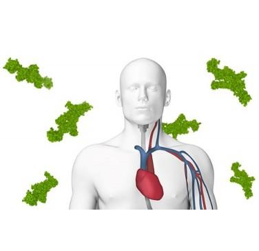 Экспресс-тест для определения сердечного тропонина в диагностике инфаркта миокарда